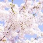 2月26日(金)~「春の団欒フェア」