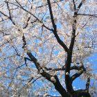 春のイベント~お花見