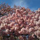 お花見フェア~4月のイベント